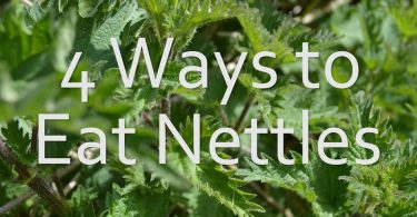 4 ways to eat nettles
