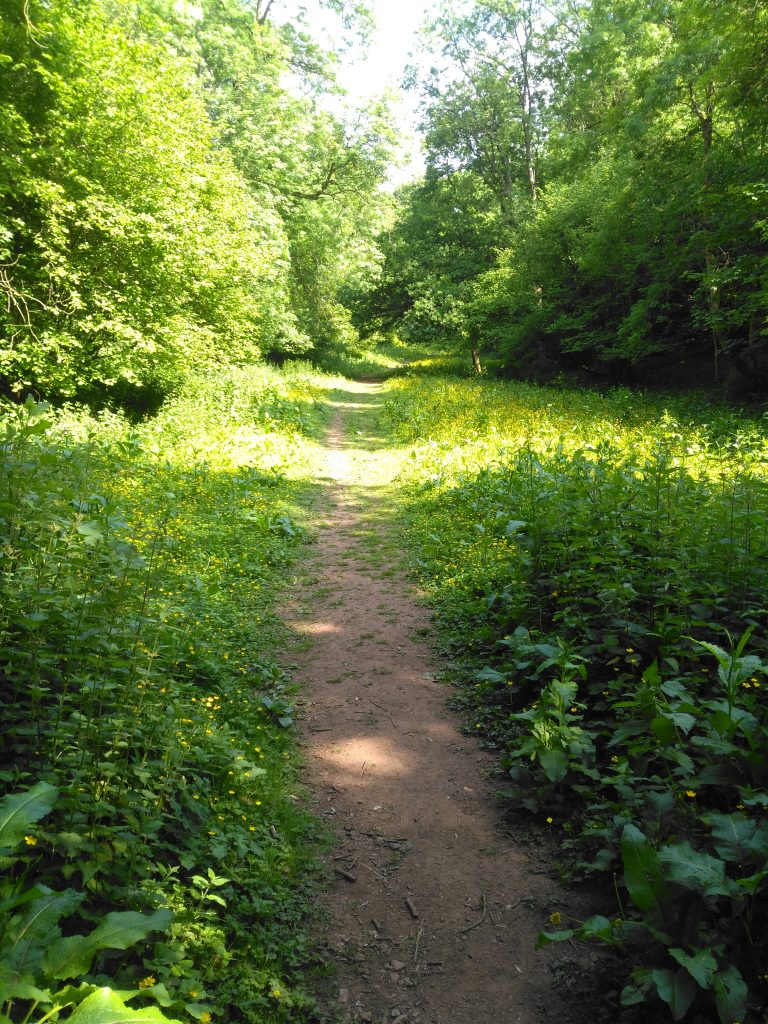 ebbor gorge trail