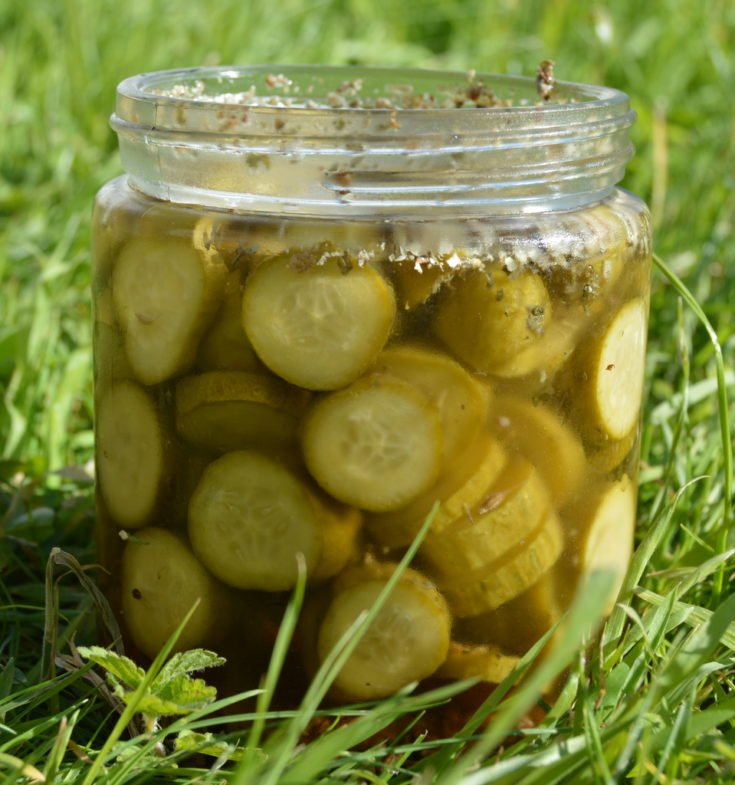 Easy Pickles Recipe