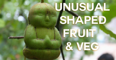 Buddha shaped pear