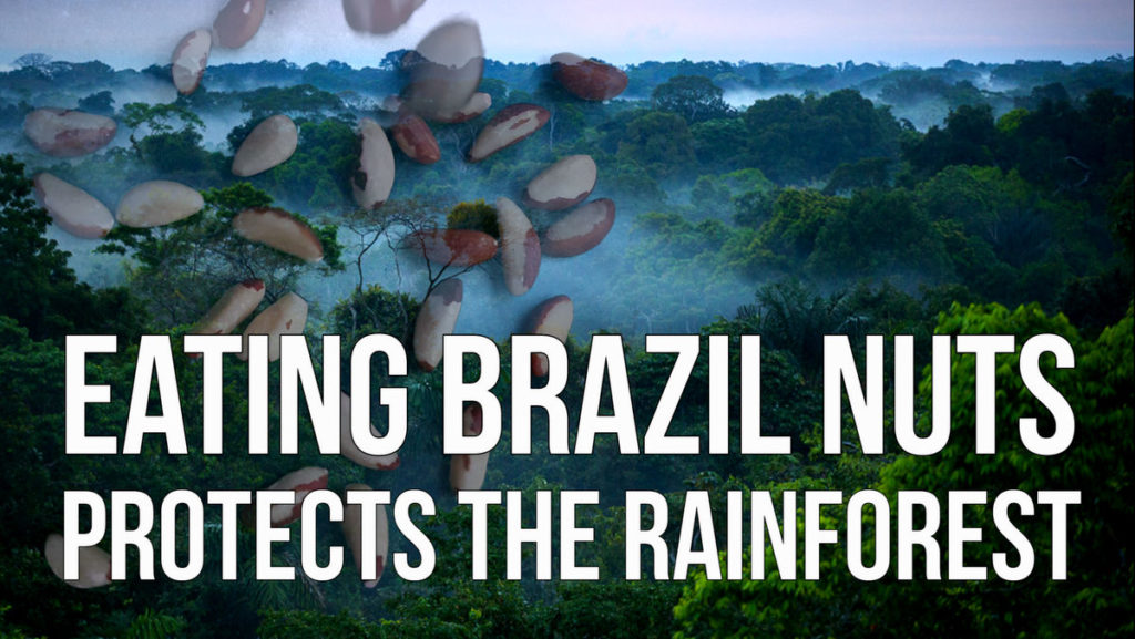 Eating Brazil Nuts Protects the Rainforest
