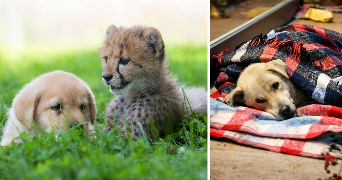 Heartwarming Animal Stories That Will Cheer Anyone Up
