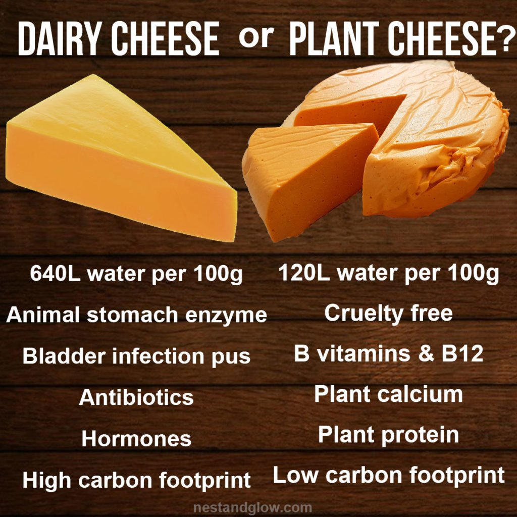 dairy cheese or plant cheese