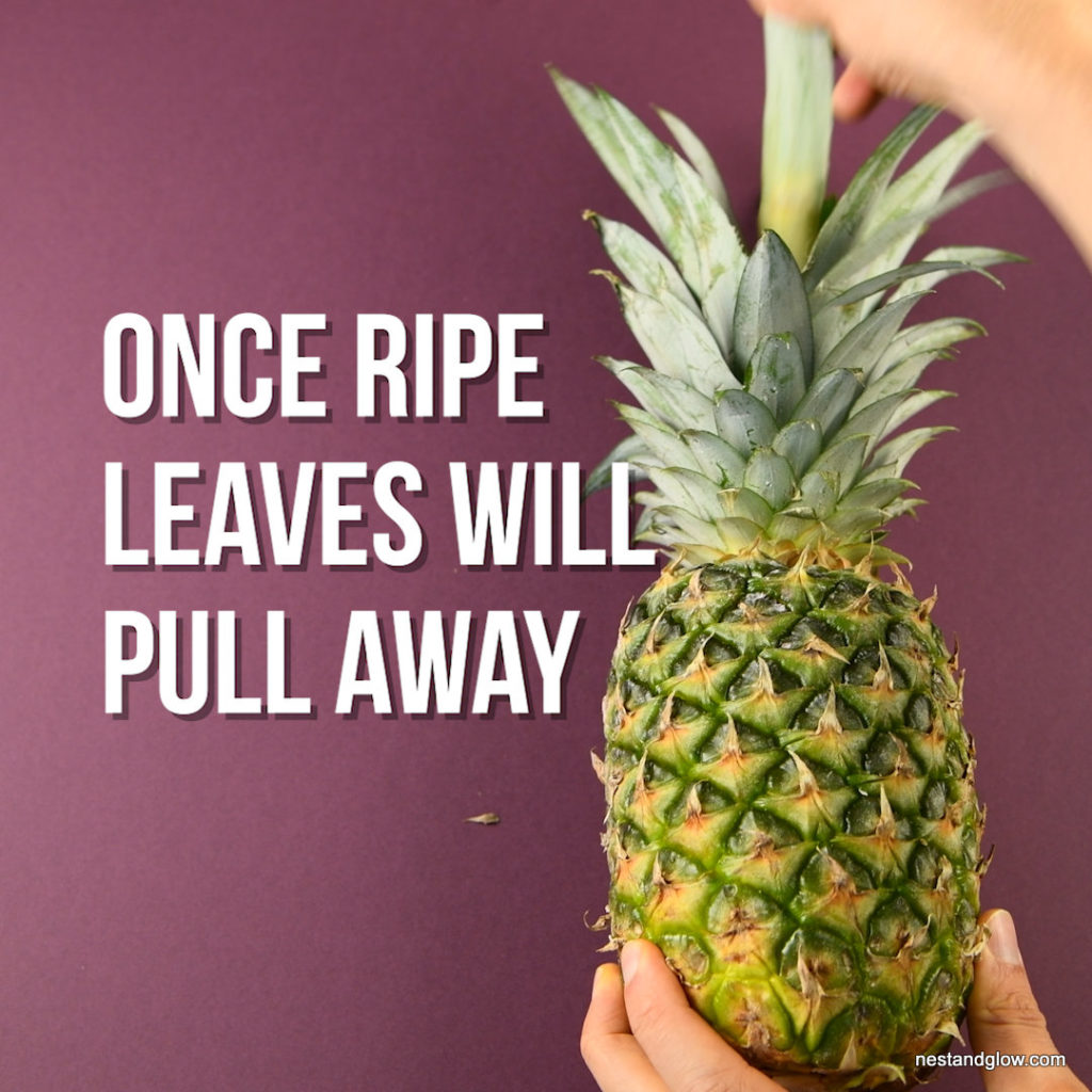 keep pineapple out of fridge to ripen