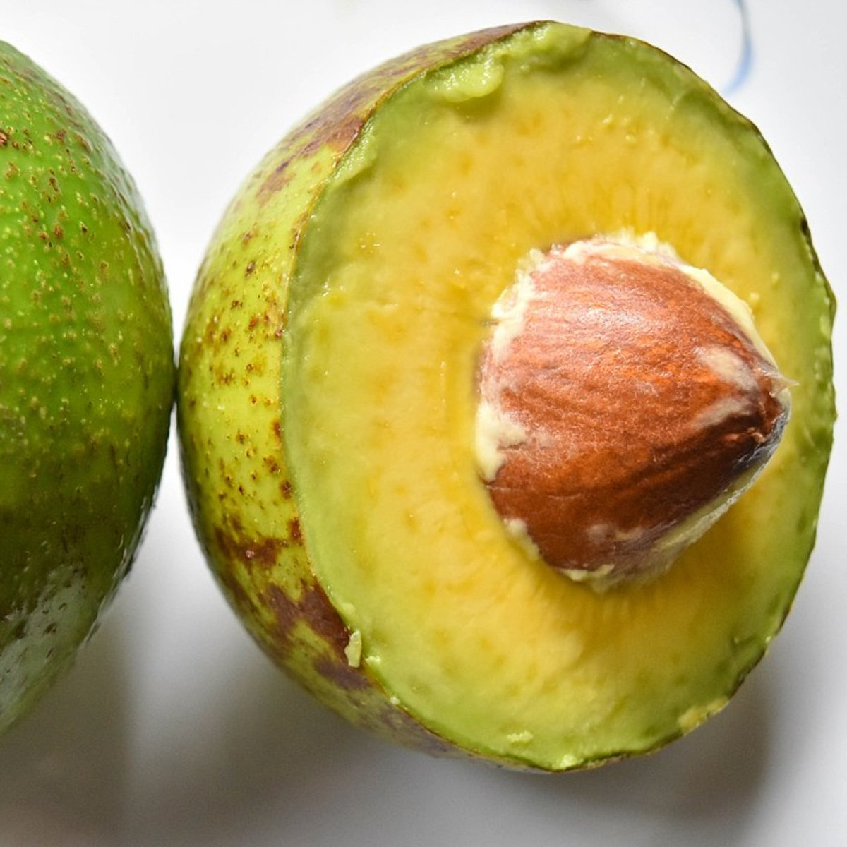 50 Avocoado Answers That Hardly Anyone Knows About