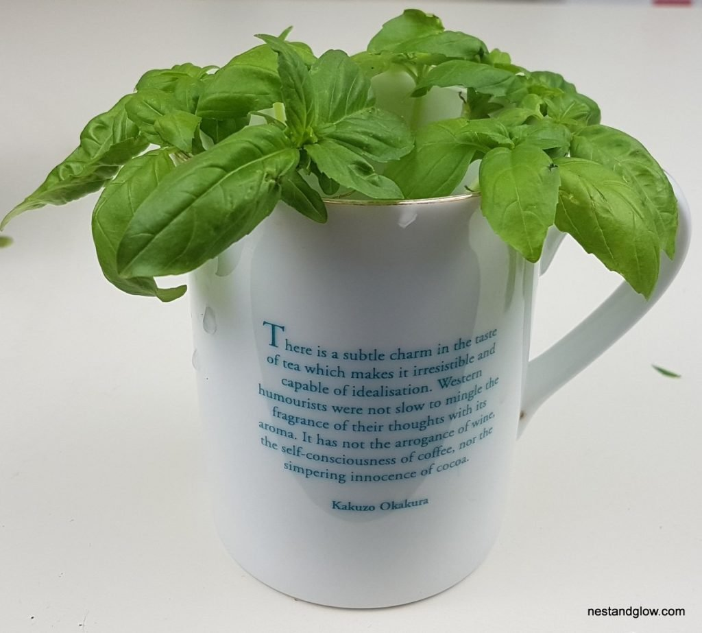 infinite basil in cup
