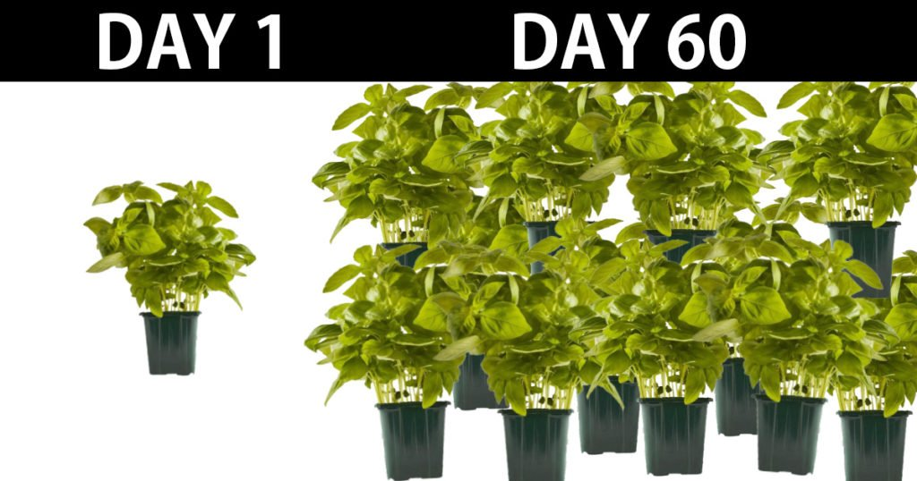 unlimited basil in 60 days