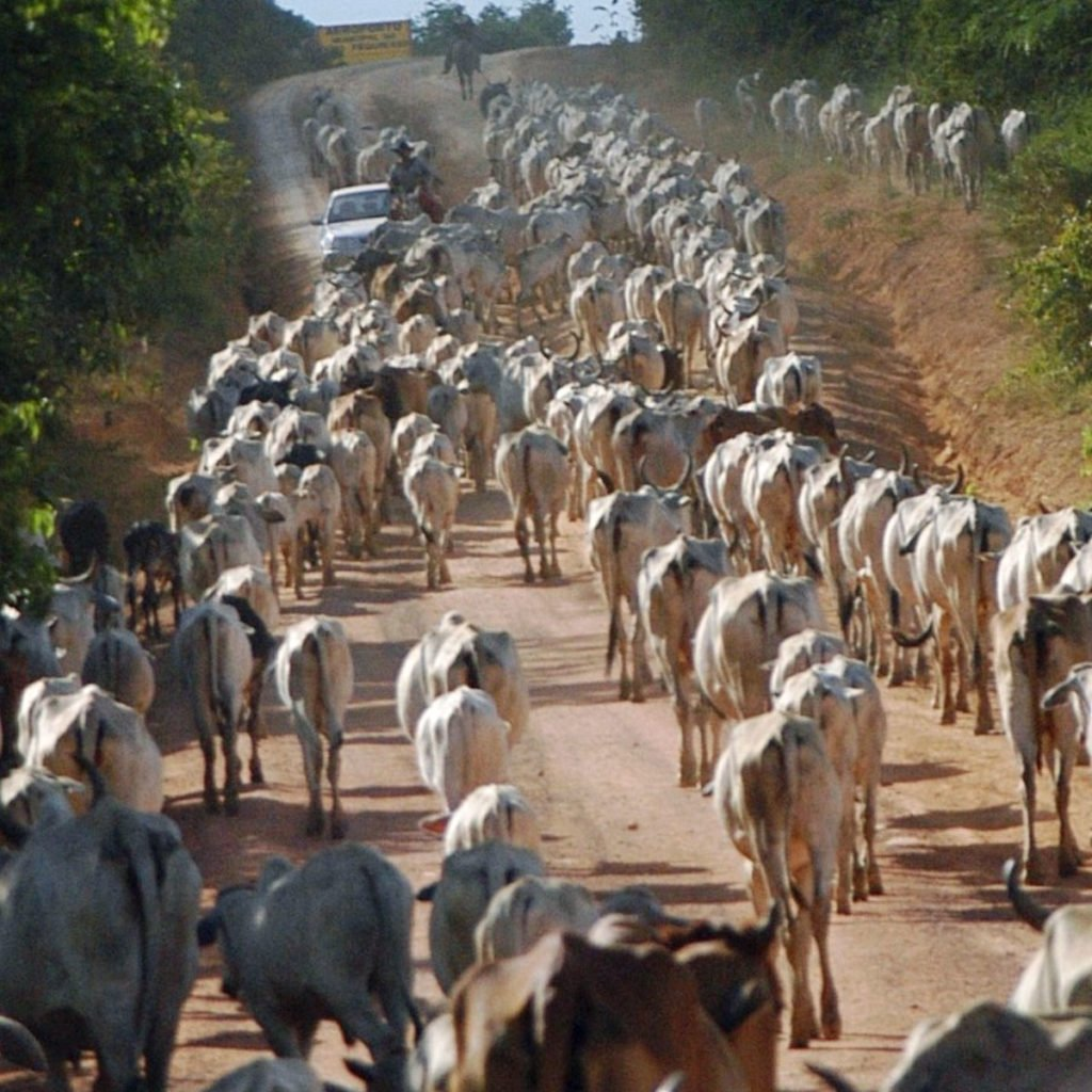cattle farming in brazil